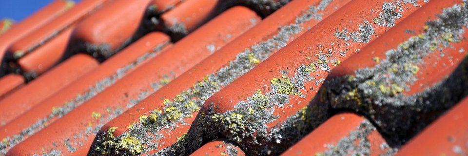 N'attendez pas que les micro-organismes Envahissent votre toiture pour agir !